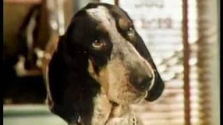 Gravy Train 1979 talking dog TV commercial