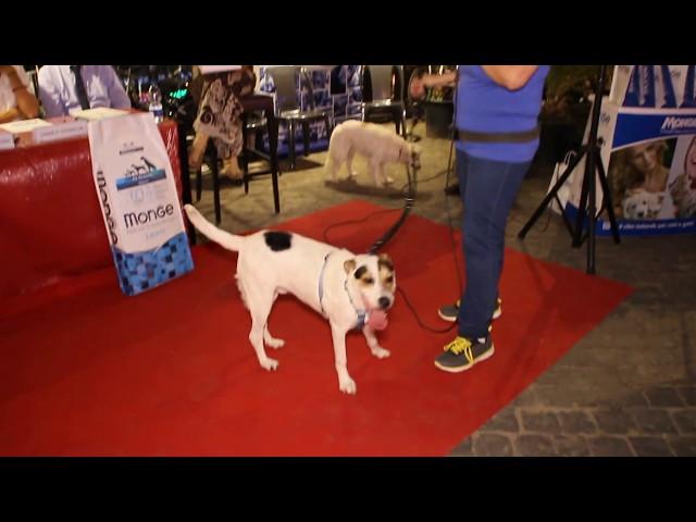Cani Abbandonati Contest 4 Zampe al Tevere - Daniela Martani