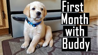 First Month Experience with our Labrador Puppy (Lot of Cute Experiences and Photos)