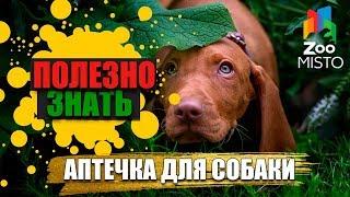 Полезно знать с ZooMISTO | Аптечка для собаки