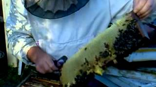 Майский мёд!!! на пасеке Малышева(, 2013-05-21T05:53:22.000Z)