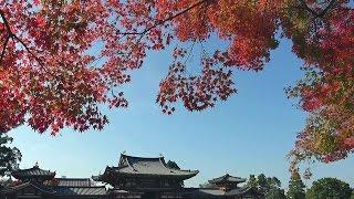 京都・宇治 紅葉 平等院 Byōdō-in Temple in autumn, Kyoto(2016-11)