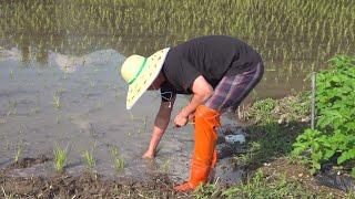 쌀농사를시작합니다 모내기를해봤습니다