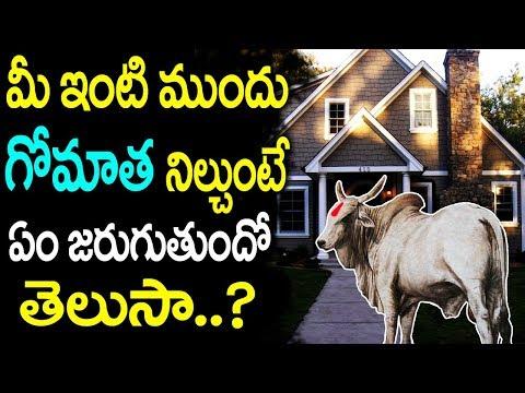 మీ ఇంటి ముందు గోమాత నిల్చుంటే ఏం జరుగుతుంది? || Signs for Cow standing in front of your Home