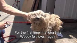 Спасение собаки бездомной