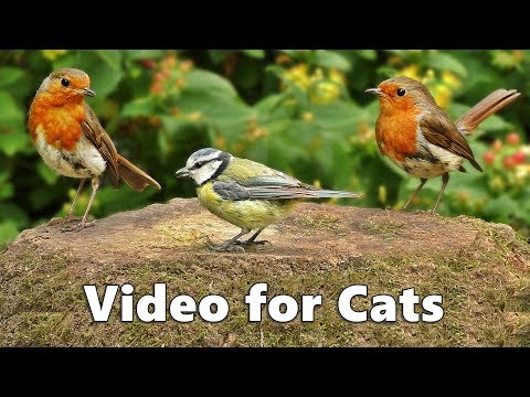 Videos for Cats to Watch : Birds Chirping Spectacular – सुंदर पक्षी ध्वनियां – पक्षियों