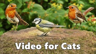 Videos for Cats to Watch : Birds Chirping Spectacular - सुंदर पक्षी ध्वनियां - पक्षियों