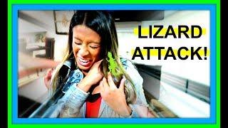 LIZARD ATTACK! | LOST LIZARD IN HOUSE!