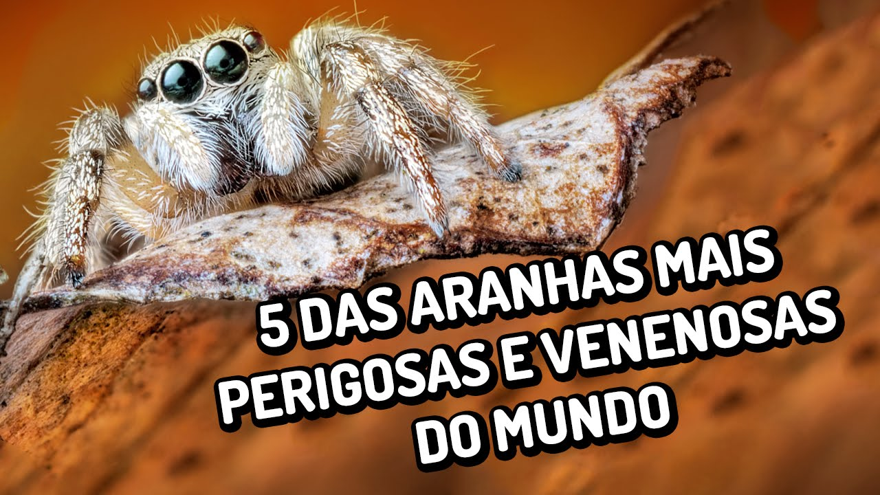 As 5 aranhas mais perigosas e venenosas do mundo