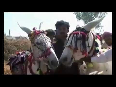 Donkey  in market  (gada ki market ma value)