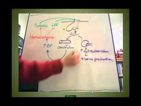 ADH Tutorial - YouTube