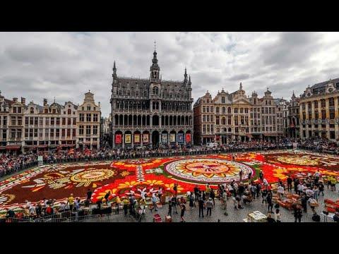 يورو نيوز:شاهد: سجادة عملاقة من الزهور تزيّن وسط بروكسل