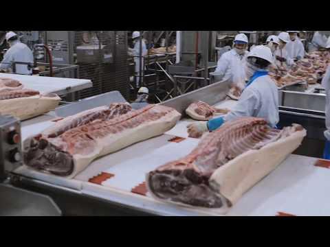 A pig slaughterhouse