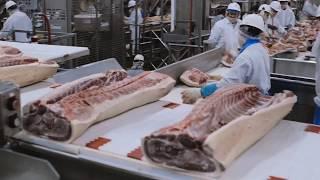 돼지도축장(선진국), a pig slaughterhouse,屠畜場,