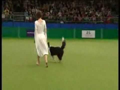 Claudia Moser, Celtic dream freestyle routine, Crufts 2009