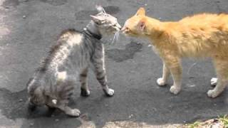 Бешеные коты 1