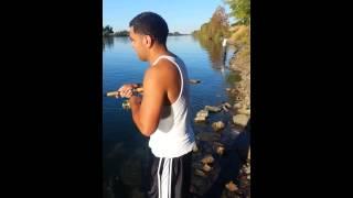 Sacramento Salmon Run