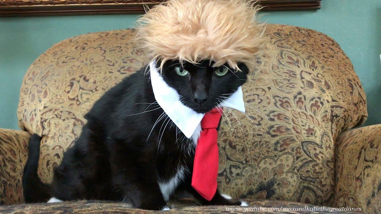 Grumpy Cat in Trump Halloween Costume