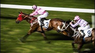 China Footprint: Horse racing continues to thrive in Hong Kong