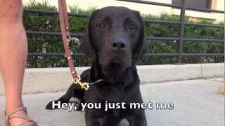 "Trust Me Baby - Guide Dog Parody of ""Call Me Maybe"""
