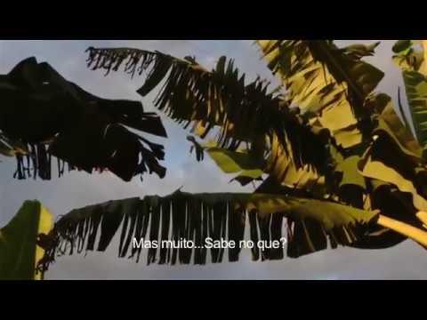 Teaser Ribeira Essencial, um mergulho na cultura quilombola do Vale do Ribeira com Marcelo Rosenbaum