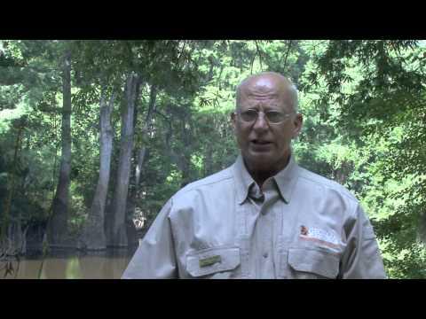 2014 Georgia Alligator Season