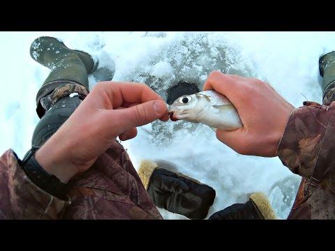 синец зимняя ловля на реке