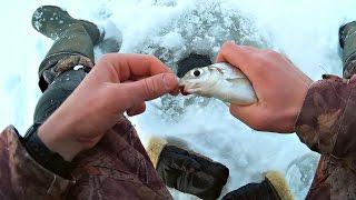 Рыбалка на Реке Зимняя Рыбалка на Подлещика Ловля Сопы (Ловля Зимой) / Bream Fishing – MF №86(Видео о #рыбалке на #реке #Вятка. #Ловля #подлещика #зимой. В #Кировской #области #зимой большая часть #рыболов..., 2016-12-11T14:44:35.000Z)