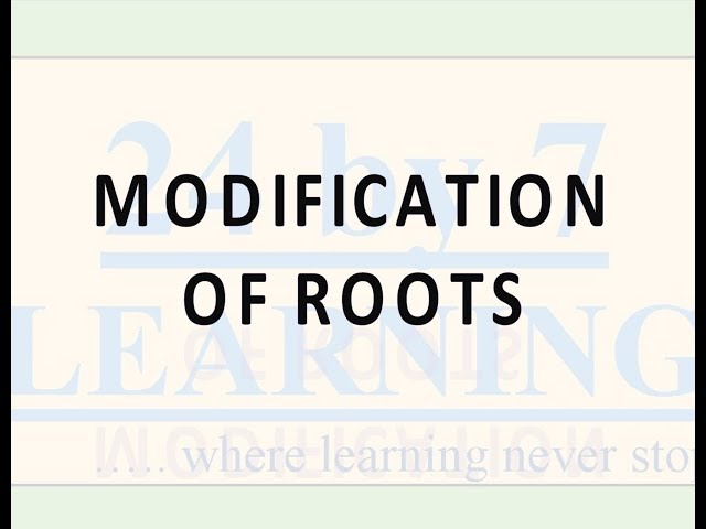 Video 2: Modification of Roots