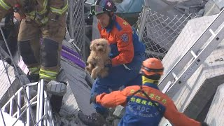 Dog pulled from collapsed building in Taiwan earthquake