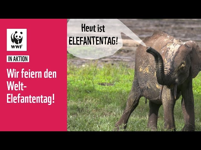 Heute ist Elefantentag!   WWF in Aktion
