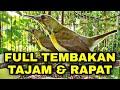 Kolibri Kelapa Gacor Ngalas Buka Paruh Hummingbird Indonesia  Mp3 - Mp4 Download