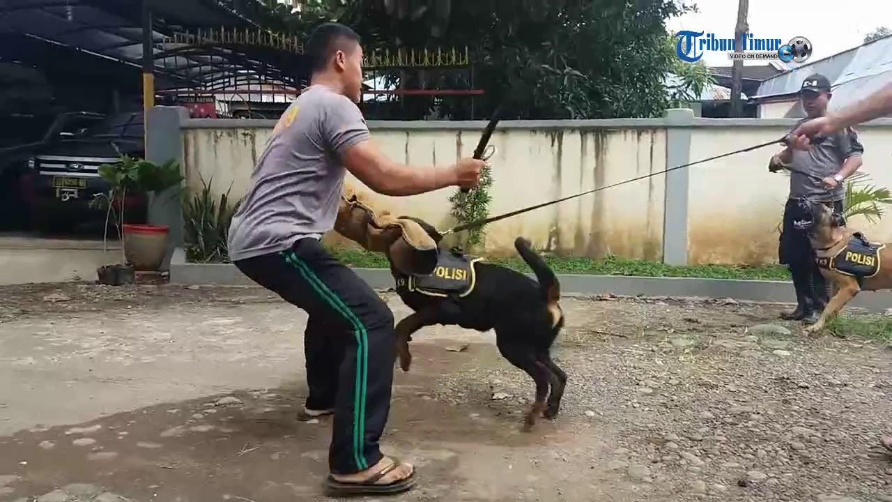 Polisi Ini Nyaris Digigit Saat Melatih Anjing Youtube