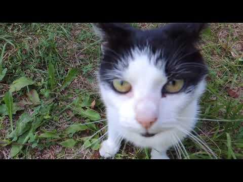 осторожно!!! бухие коты, валерьянка рулит))))))))нарезка приколов