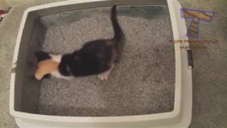 SUPER WEIRD CATS  -  Extremely FUNNY CAT VIDEOS compilation