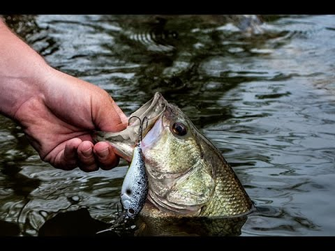 Thumbnail: Catch MORE Fish With this Tip!