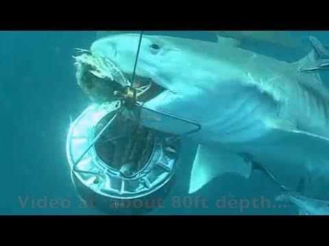 Offshore Cape Town underwater action! Action sous la mer au large du Cap!