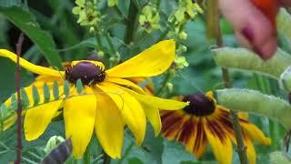 Jak pozyskać nasiona kwiatów?