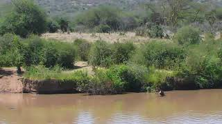 African Animals - Watering Hole Cam 12-13-2017 00:00:47 - 00:59:55 thumbnail