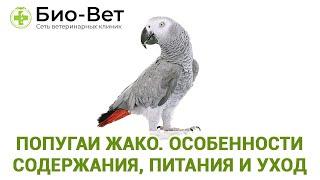 Попугаи жако. Особенности содержания, питания и уход. Ветеринарная клиника Био-Вет.