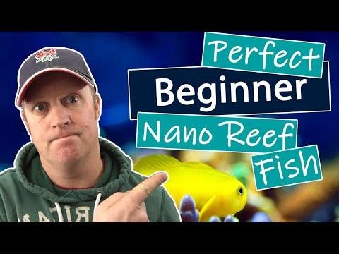 Best Nano Reef Fish For Beginners