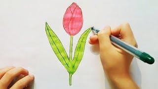 КАК НАРИСОВАТЬ ЦВЕТОК | ТЮЛЬПАН | Уроки рисования. Простые домашние рисунки карандашом (Эмилия)