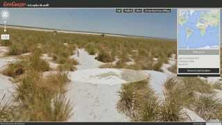 BIRDS. BIRDS EVERYWHERE. (Google Maps StreetView GeoGuessr) Free HD Video