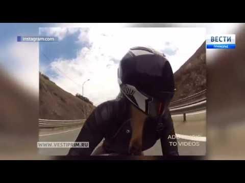 Во Владивостоке насмерть разбилась мотоциклистка. Подробности страшного ДТП