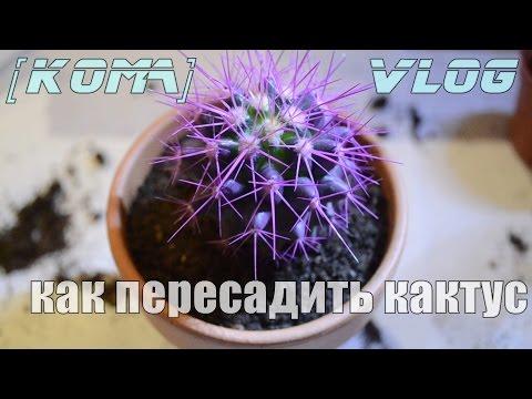 [KOMA]vlog | как пересадить кактус
