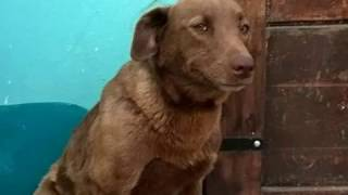 Грустная собака сидела в приюте 2 года, но вдруг почувствовала знакомый запах