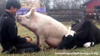心ほんわか優しい世界。豚・牛・犬・猫が次から次へとやってくる。動物たちに愛され過ぎている男性
