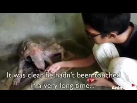 Dog Is Rescued From Near Death By Animal Aid