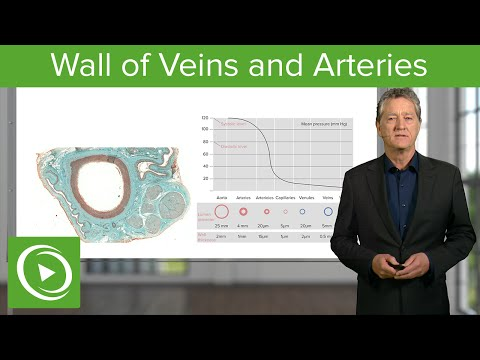Wall of Veins and Arteries  – Histology | Medical Education Videos