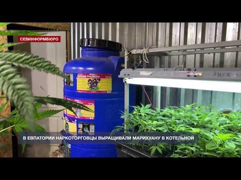 НТС Севастополь: В Евпатории наркоторговцы выращивали марихуану в котельной